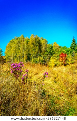 Gentle golden autumn and spacious meadows. - stock photo