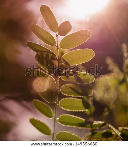 Gentle green leaves during sunrise  - stock photo