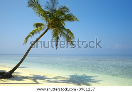 Gentle seascapeI with palmtree on a beach