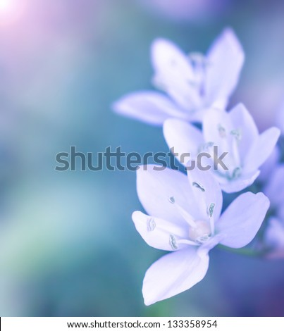 Gentle white flowers on blue blur background, fresh spring wildflowers outdoors, natural floral border, soft focus - stock photo