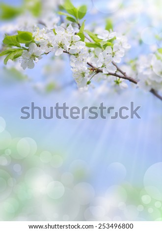Gentle white plum blossoms blooming in the spring garden on background of blue sky - stock photo