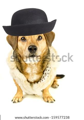 gentlemen rapper dog - stock photo