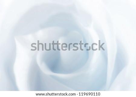 Gently blue slightly dim winter rose - stock photo