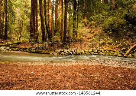 Gently flowing Redwood Creek crosses in front of Coastal redwood trees in a forest environment dappled by sunshine