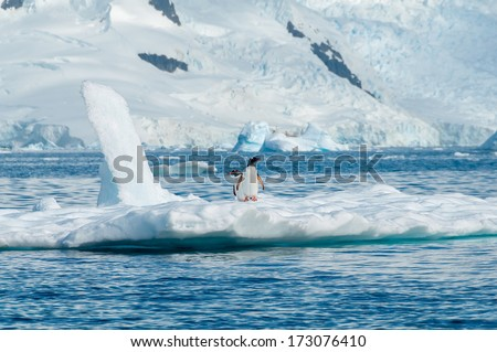 Gentoo penguins on iceberg Antarctica - stock photo