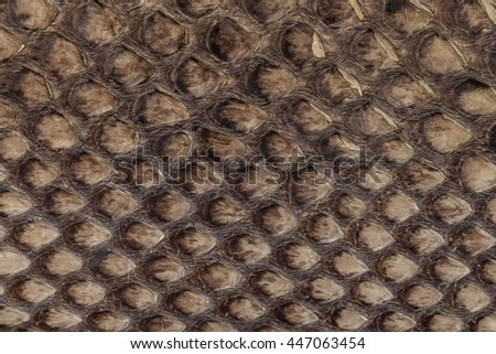 Genuine snakeskin. Leather texture background. Closeup photo. Skin reptiles such as python or cobra. - stock photo