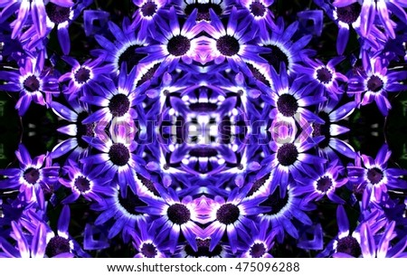geometric composition daisy flower Cape, Dimorfoteca.daisy flower African, Arctotis, Asteraceae, variety of colors: purple, orange, yellow, pink, creative photography of Munimara,
