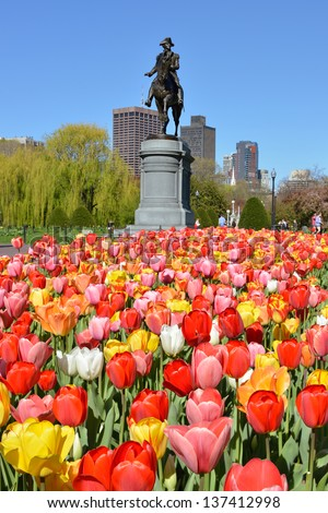 George Washington statue and colorful tulips in Boston Public Garden - stock photo