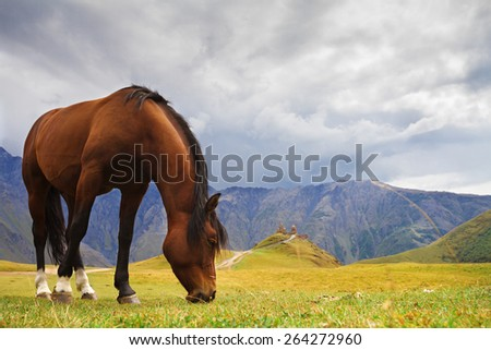Georgia. Horse on the mountain pasture - stock photo