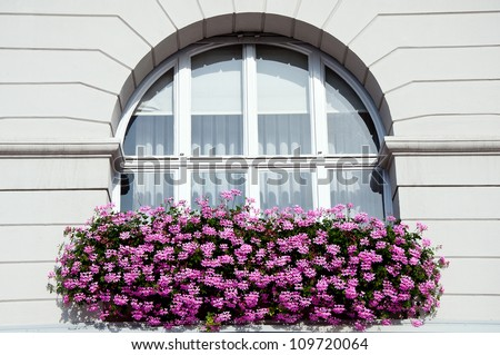 Geranium flowers in front of a big window - stock photo