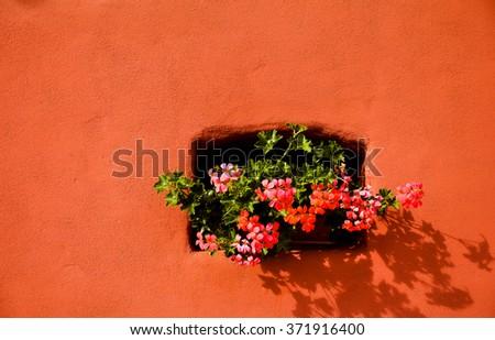 Geranium flowers (Pelargonium) in the small window - stock photo