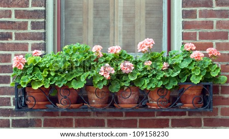 Geraniums in Wrought Iron Window Box - stock photo