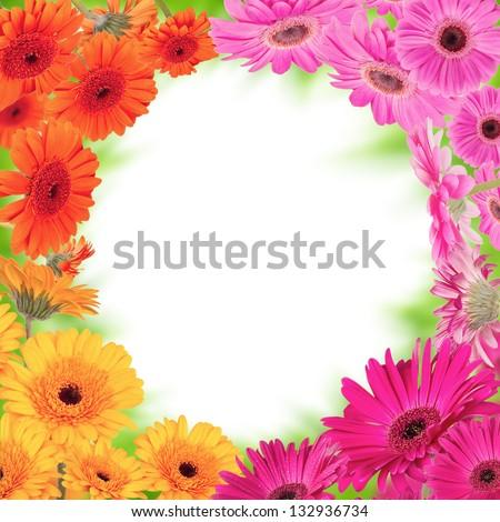 Gerber blossoms frame - stock photo