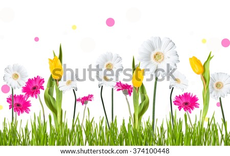 Gerber Daisy,  tulips and butterfly isolated on white background - stock photo