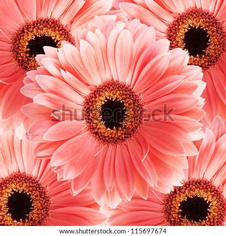 Gerber flower. - stock photo