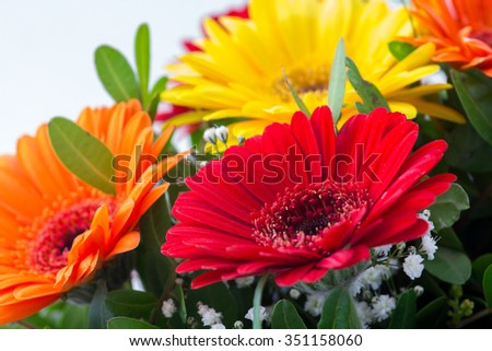 Gerbera - beautiful, colorful summer flowers in rich tones