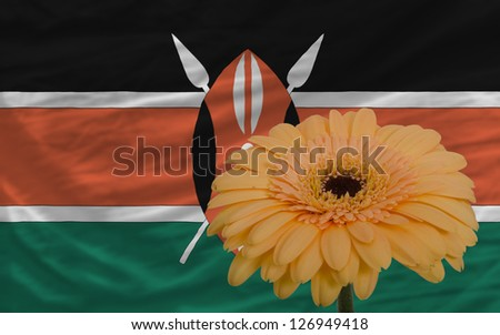 gerbera daisy flower and national flag of kenya as concept and symbol of love, beauty, innocence, and positive emotions - stock photo