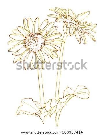 Gerbera Daisy Line Drawing Gerbera Daisy Flower C...