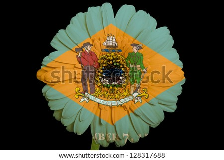 gerbera daisy flower in colors flag of us state of delaware on black background as concept and symbol of love, beauty, innocence, and positive emotions - stock photo