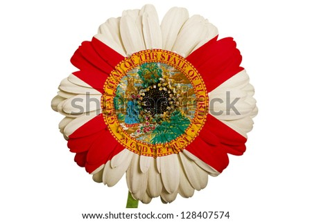 gerbera daisy flower in colors flag of us state of florida on white background as concept and symbol of love, beauty, innocence, and positive emotions