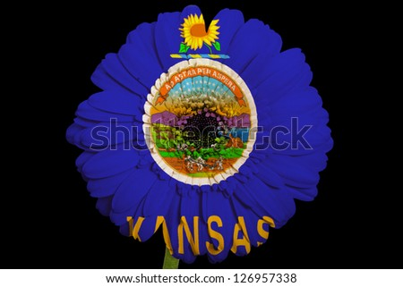 gerbera daisy flower in colors flag of us state of kansas on black background as concept and symbol of love, beauty, innocence, and positive emotions - stock photo