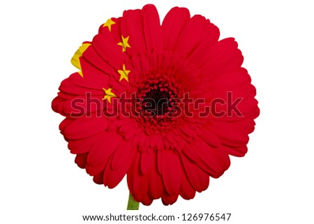 gerbera daisy flower in colors national flag of china on white background as concept and symbol of love, beauty, innocence, and positive emotions