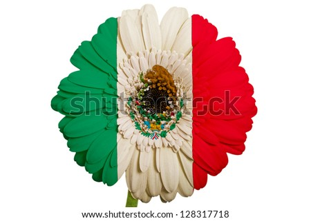 gerbera daisy flower in colors national flag of mexico on white background as concept and symbol of love, beauty, innocence, and positive emotions - stock photo