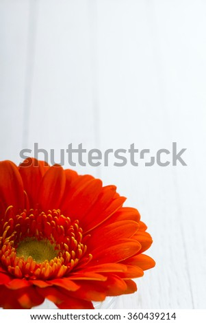 gerbera flower head on white wood table background
