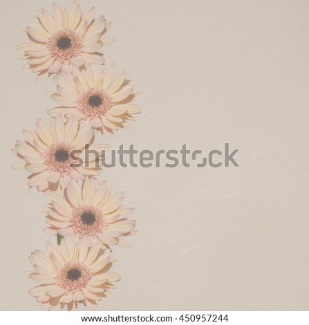 Gerbera flower on paper texture for soft background. - stock photo
