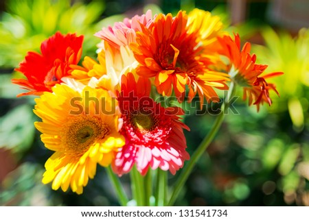 Gerbera flowers against green natural background - stock photo