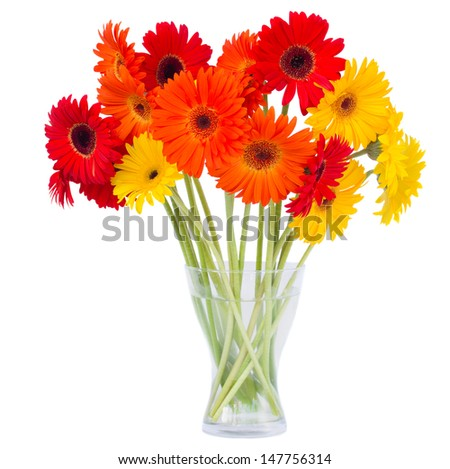gerbera flowers in vase  isolated on white background - stock photo