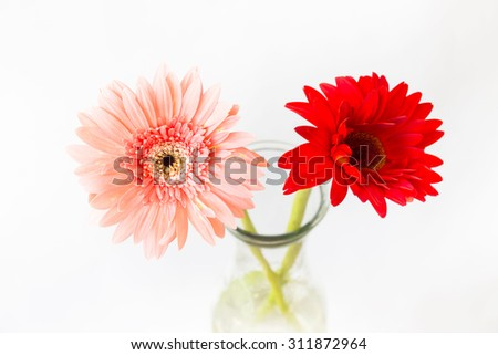gerbera flowers in vase over white background, selective focus