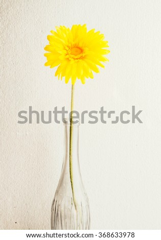 Gerbera in vase on white background