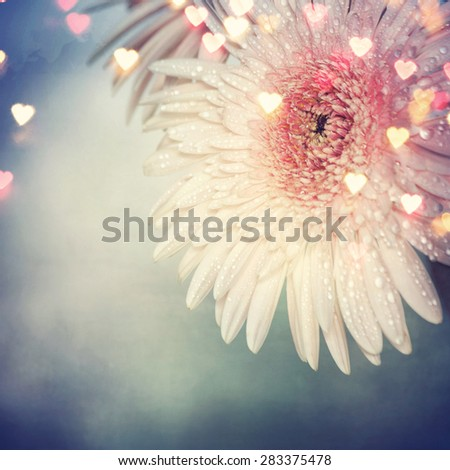 Gerbera, vintage style, spring flowers - stock photo