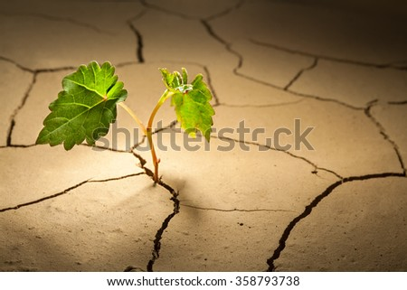 germ of grapes in drylands - stock photo