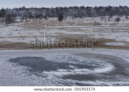 German bog in wintertime
