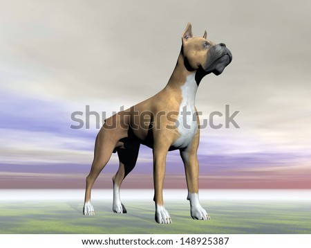 German boxer dog standing on the ground in grey cloudy background