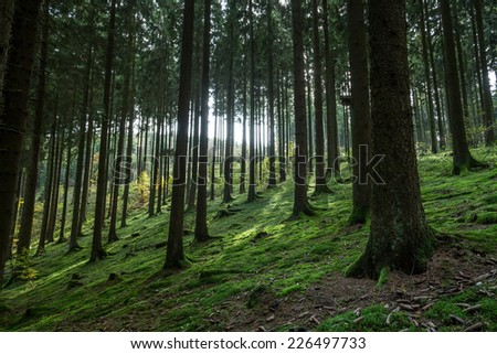 german coniferous forest