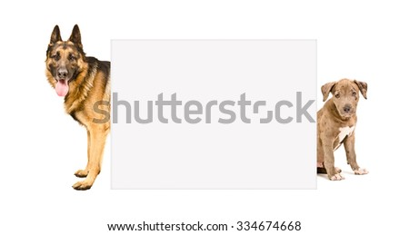 German shepherd and a pit bull puppy peeking from behind banner isolated on white background  - stock photo