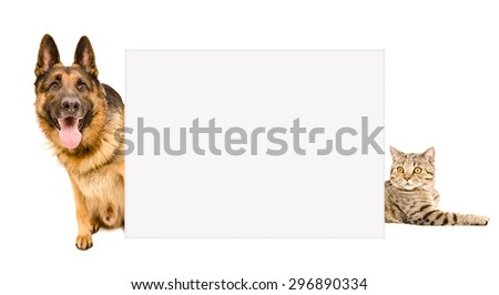 German Shepherd and cat peeking from behind a poster, isolated on white background - stock photo