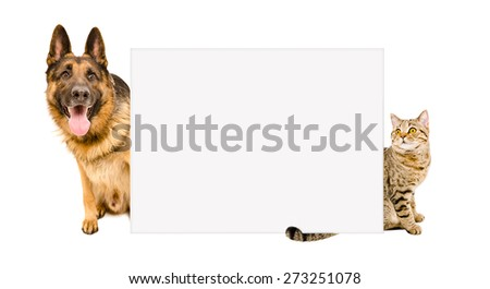 German Shepherd and Cat Scottish Straight looking out from behind a banner, isolated on white background