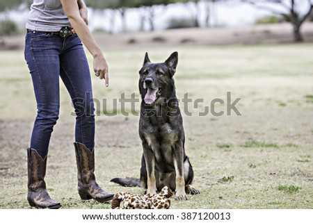 German Shepherd being trained at the park