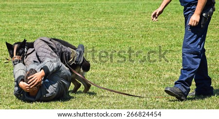 German shepherd dog in training - stock photo