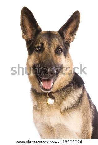 German Shepherd dog looking to the right isolated on white background - stock photo