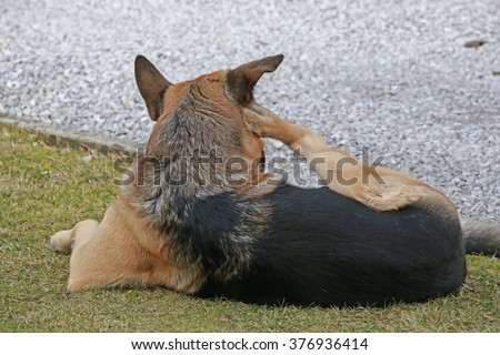Dog Scratching Stock Images Royalty Free Images Amp Vectors