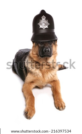 German Shepherd dog wearing a police helmet