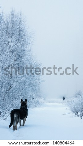 German shepherd in snow and a fog - stock photo