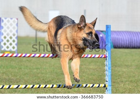 German Shepherd Leaping Over a Jump at a Dog Agility Trial - stock photo