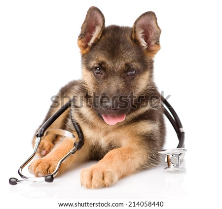German Shepherd puppy with a stethoscope on his neck. isolated on white background - stock photo