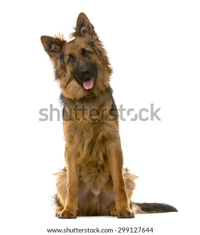 German Shepherd sitting in front of a white background - stock photo